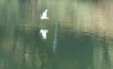 Megújul a nagykőrösi Csónakázó-tó